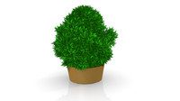 large potted plants 3d model