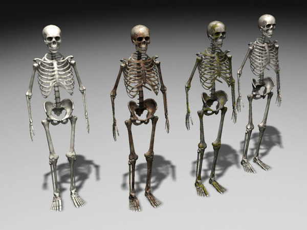 3d nextgen skeletons model