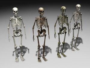 3d nextgen skeletons model