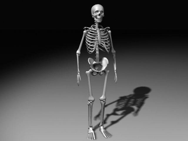 3d nextgen skeleton