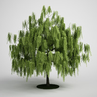 3ds max white willow