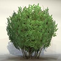 pc bush max