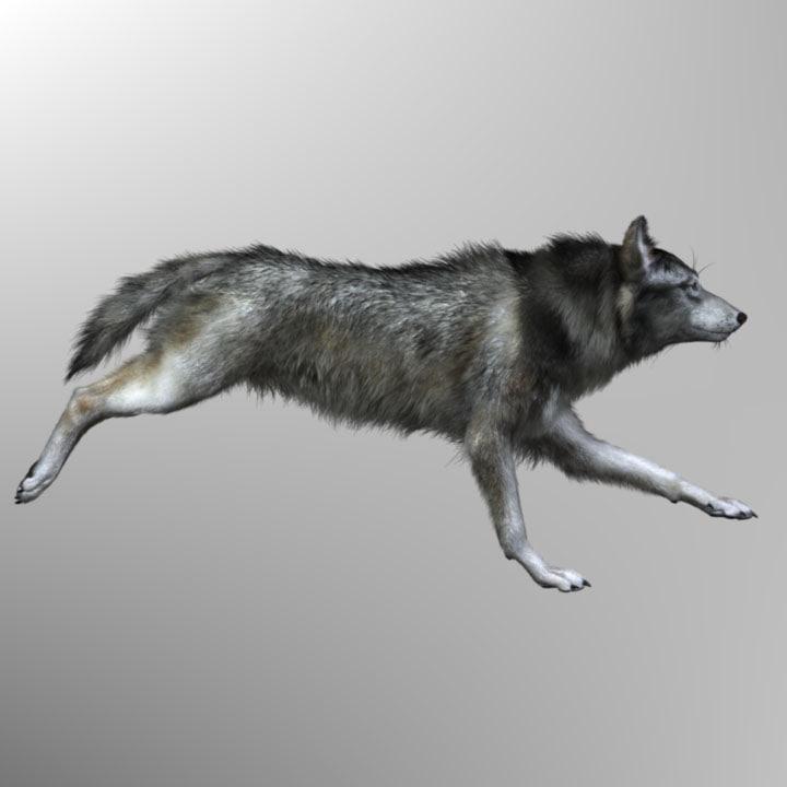 xsi photorealistic wolf canis animation