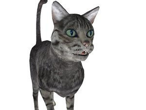 3ds max rigged cat animations