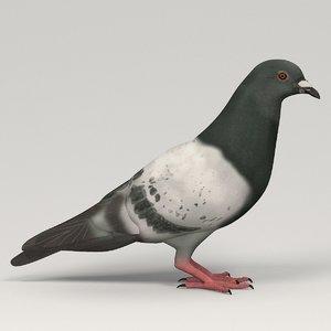 3d pigeon columba livia model