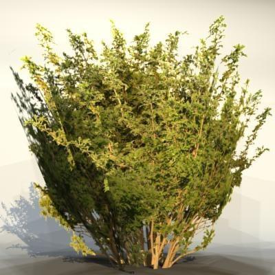 3d model of pc bush