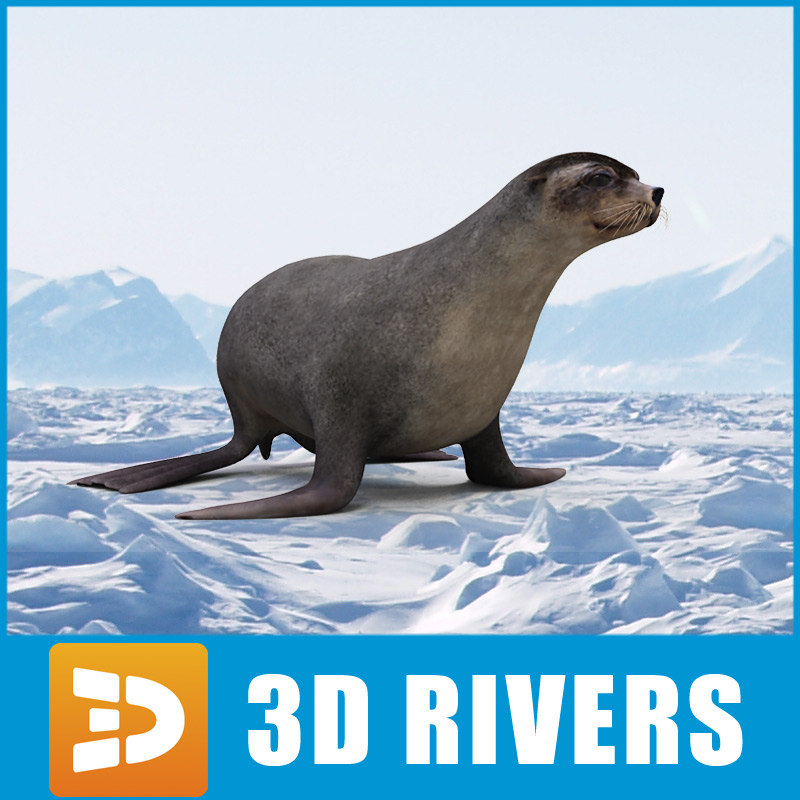 fur seal 3d model
