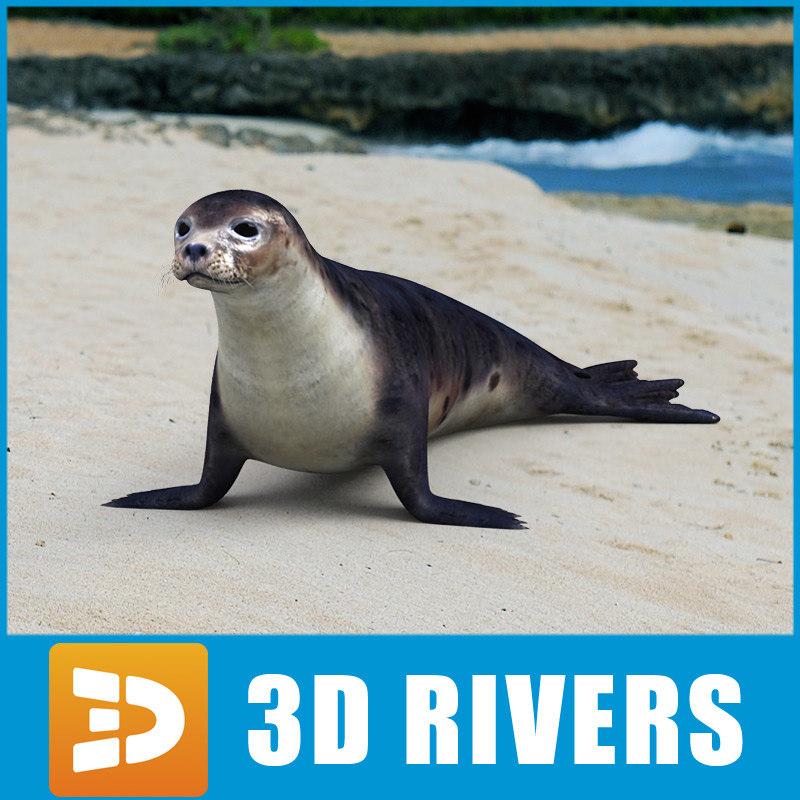 3d hawaiian monk seal