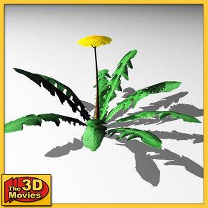 maya dandelion flower