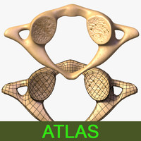 3d model vertebra atlas