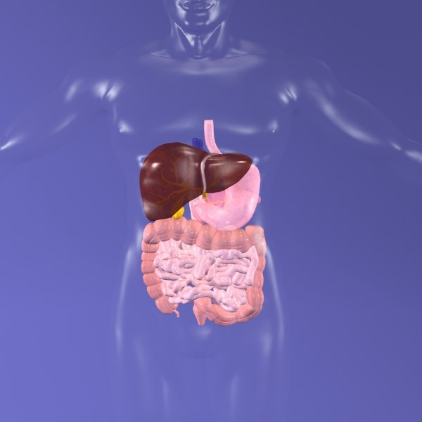 digestive x-ray 3d max