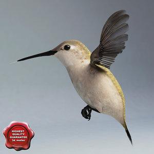 hummingbird pose1 3d model