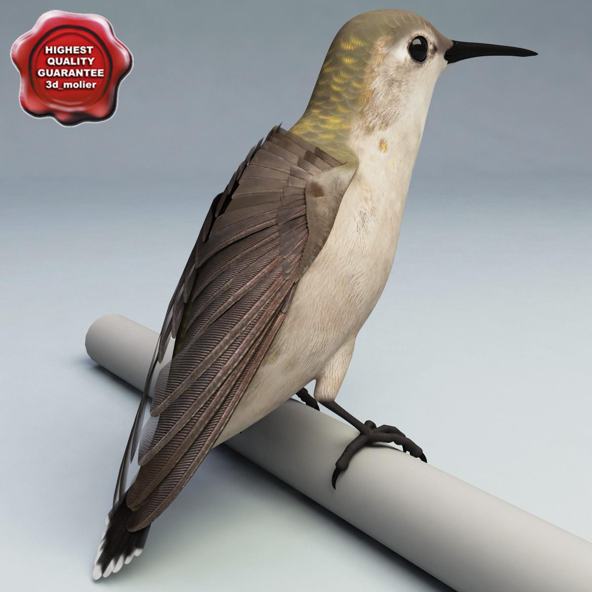 hummingbird pose2 max