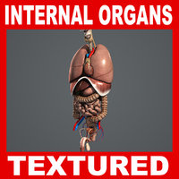 3d 3ds human internal organs