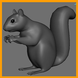 gray squirrel 3d ma