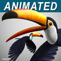 Toucan A   Flying