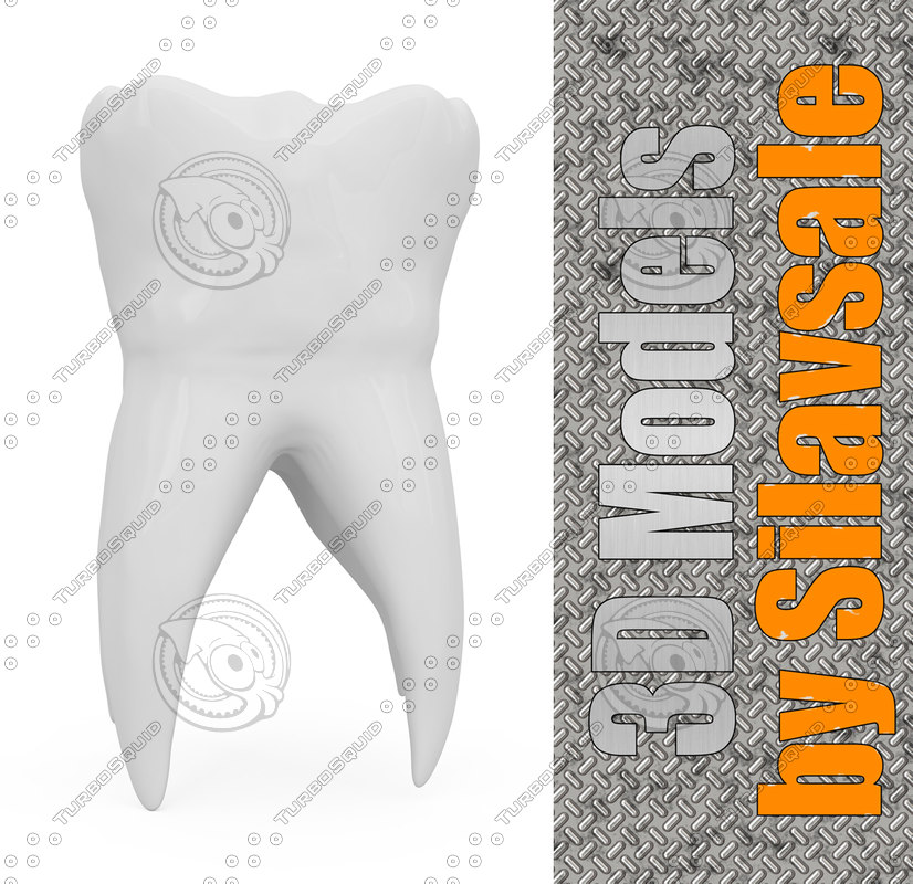 white human tooth 3d model