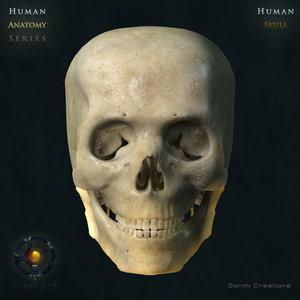 3d model human skull
