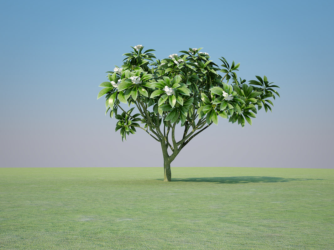 3ds max plumeria rubra tree flowers