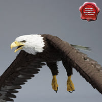 bald eagle pose 1 3d 3ds