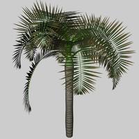 3ds max palm archontophoenix