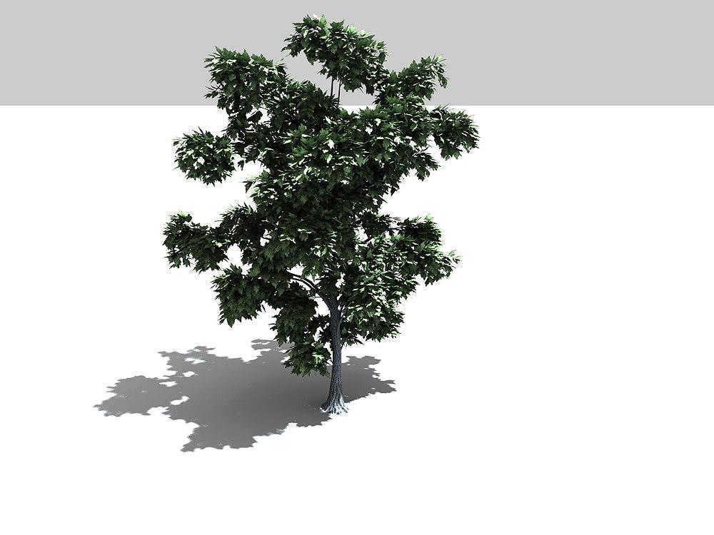3d tree broadleaf leaf model