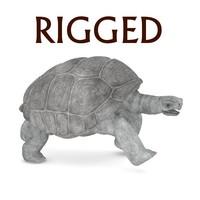 geochelone nigra rigged 3d model