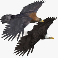 3d eagles american bald