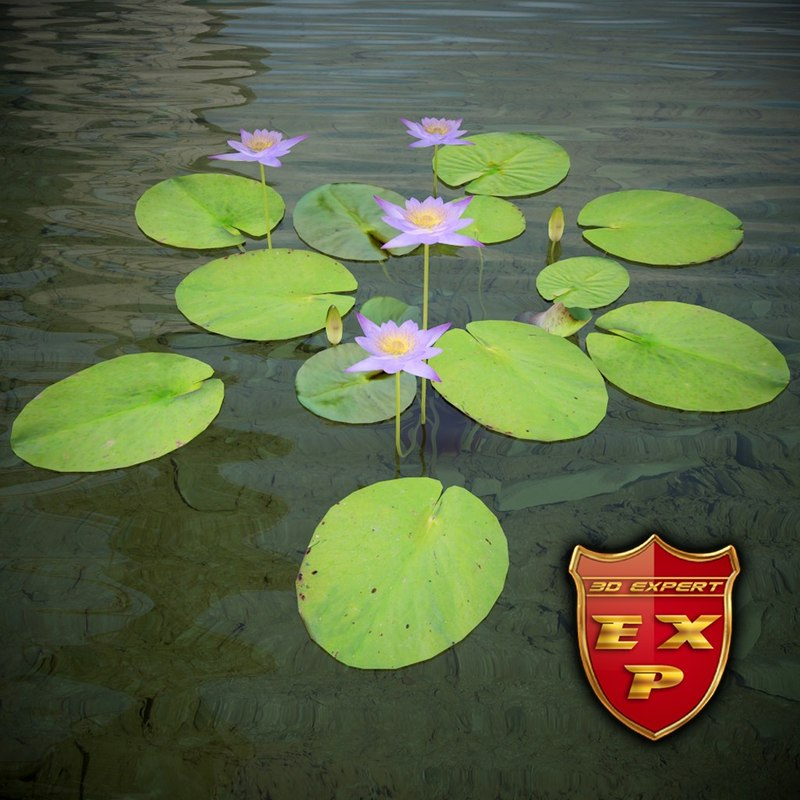 water lily nymphaea caerulea 3d max