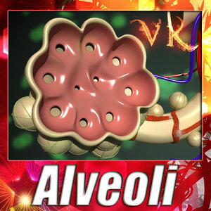 3ds max alveoli anatomy