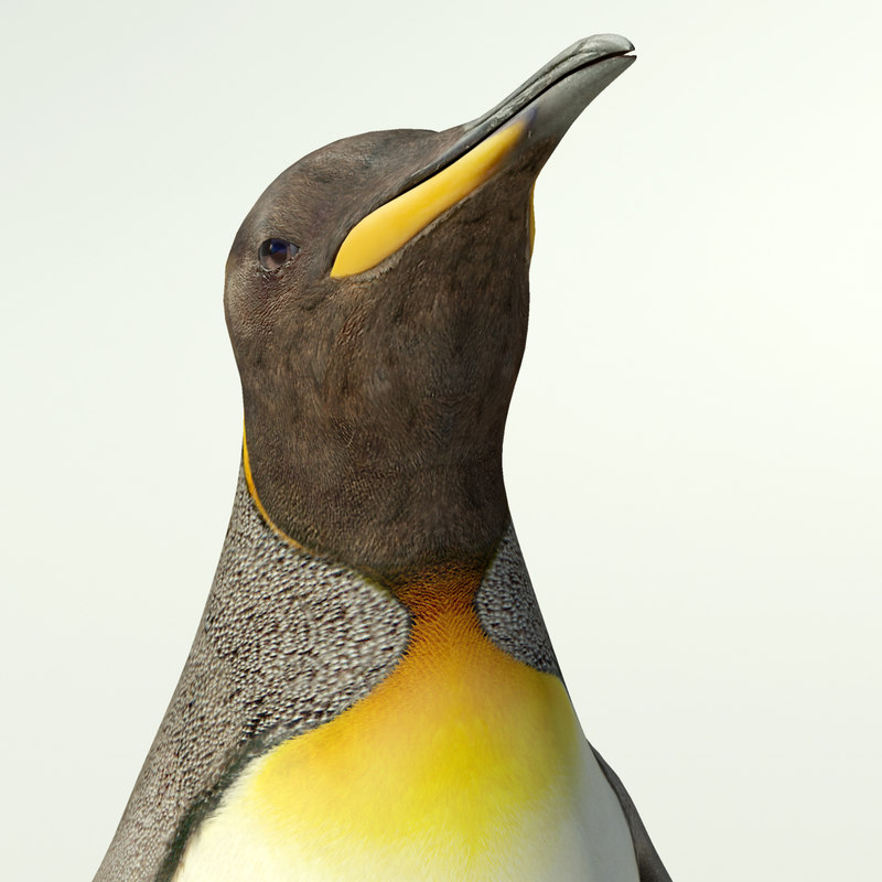 king penguin 3d model
