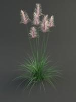 3ds max cortaderia flower