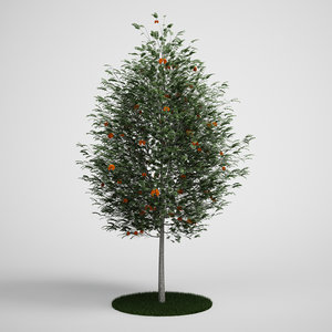 3d tree mountain ash model