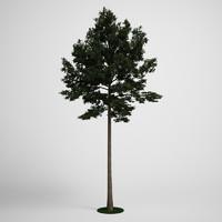 CGAxis Scotch Pine Tree  19
