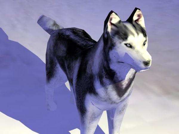 max dog husky