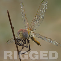 3ds max dragonfly rigged