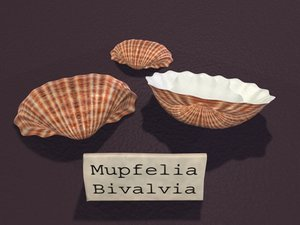 lightwave sea shell