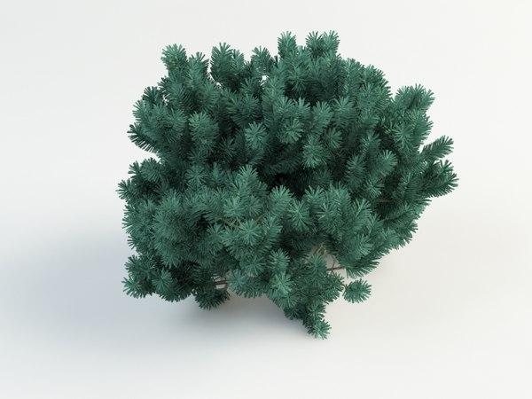 3d pinus pumilio model