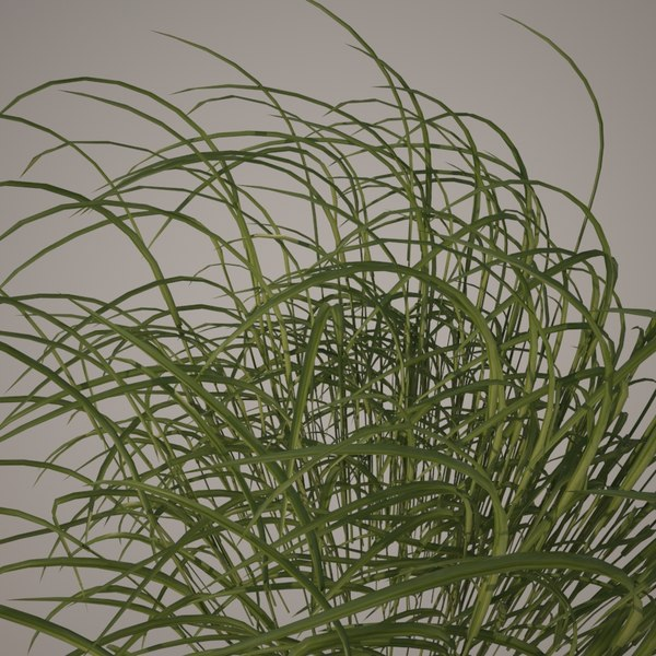 3d model plant weed grass
