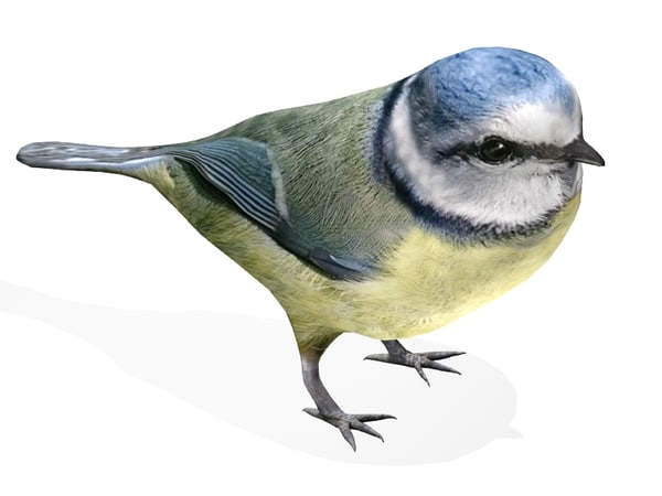 3ds nightingale bird
