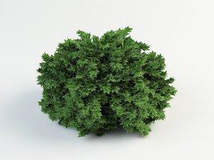 physocarpus 3d max
