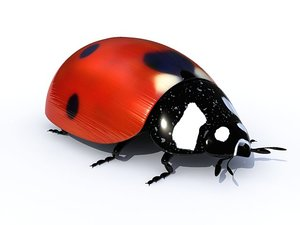 3ds ladybird ladybug