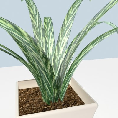 house plant max