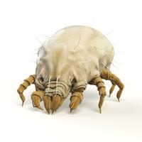 3d dust mite model