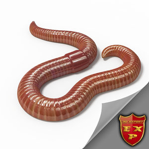 3d model earthworm