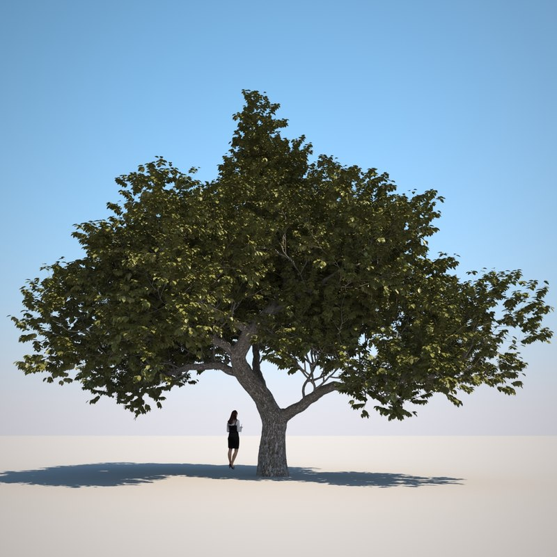 3d small tree