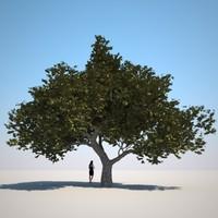 HQ Vegetation - Small Tree 1
