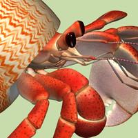 3d model hermit crab