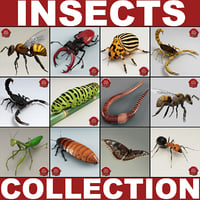 Insects Collection V4