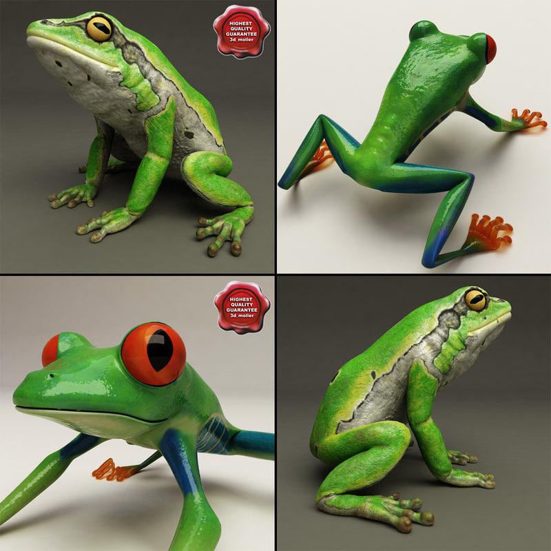 3d frogs hyla arborea model